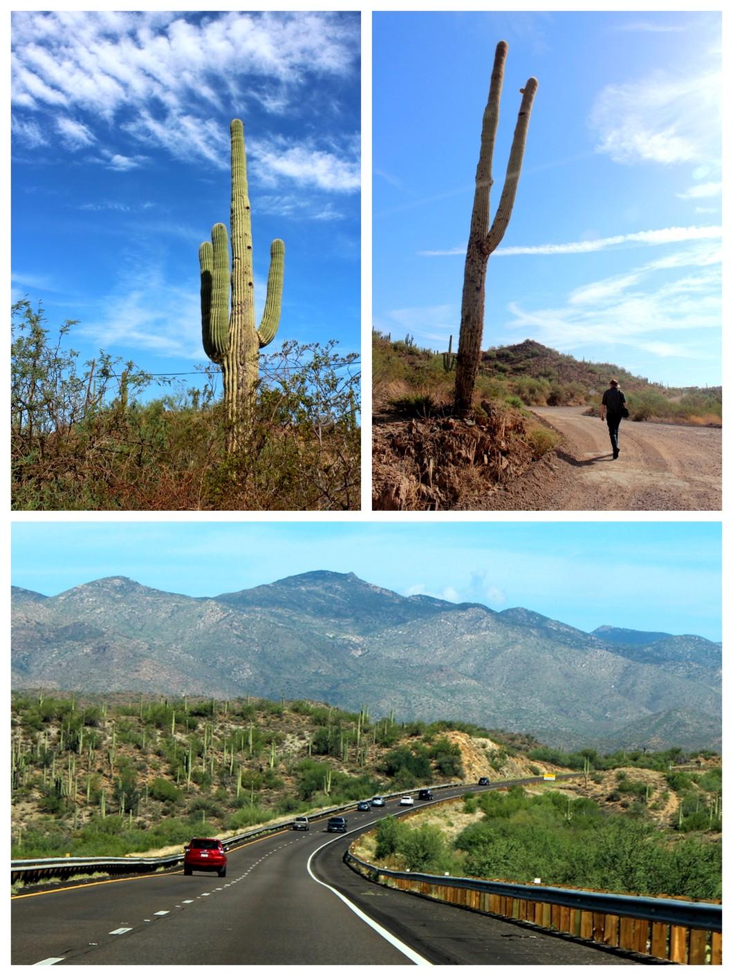 Arizona cacti.jpg