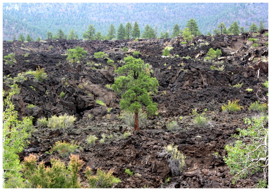 USA Sunset Crater National Monument Bonito Lava Flow