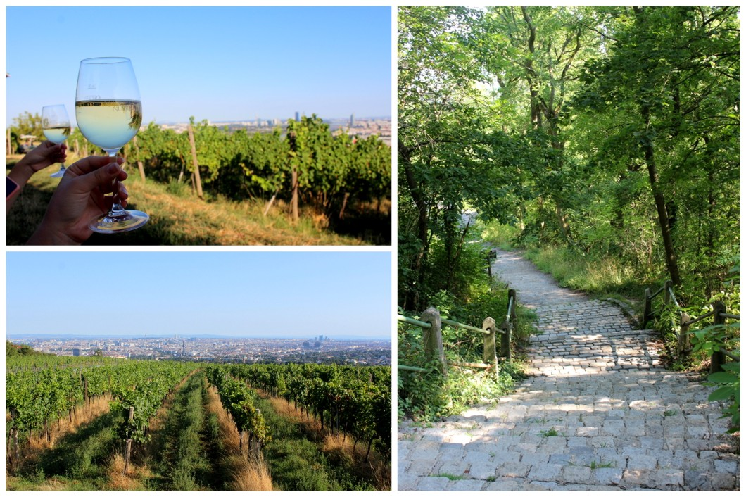 Perfect Day Kahlenberg Weinwanderung wine hike road vineyard tavern.jpg