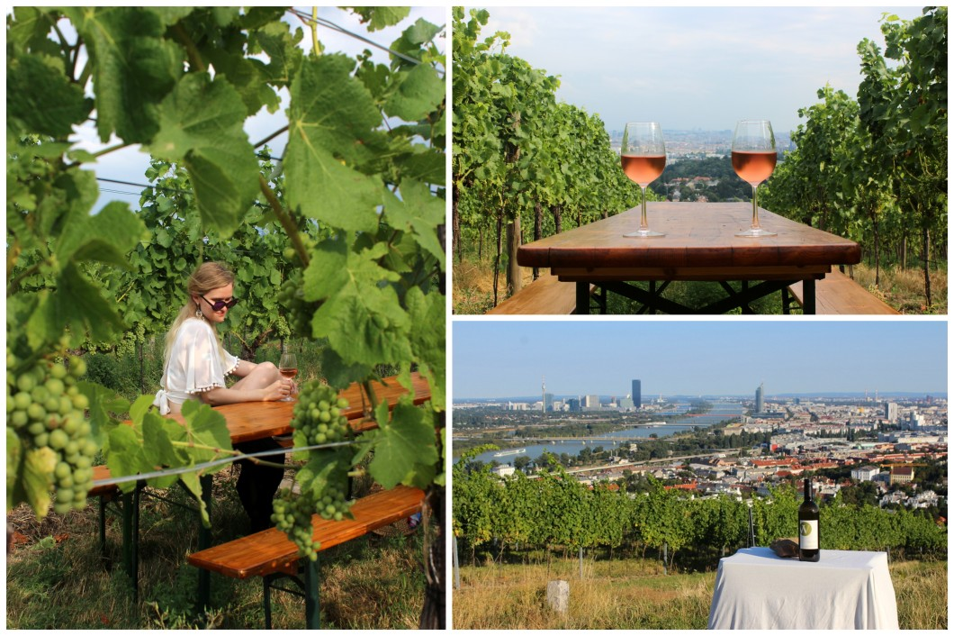 Weinwanderung Wine Hike Windischbauer im Weingarten vineyard view.jpg